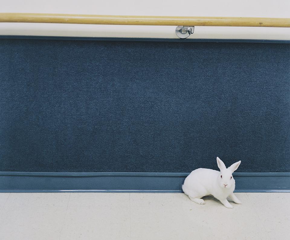 © Kyoko Hamada http://www.kyokohamada.com