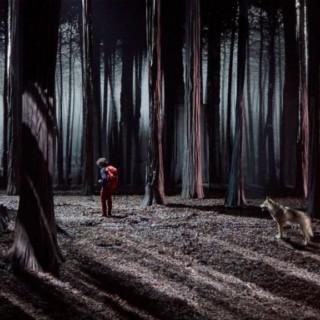 La pelle de la forêt
